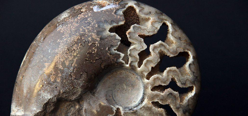 amonit, mineral expo