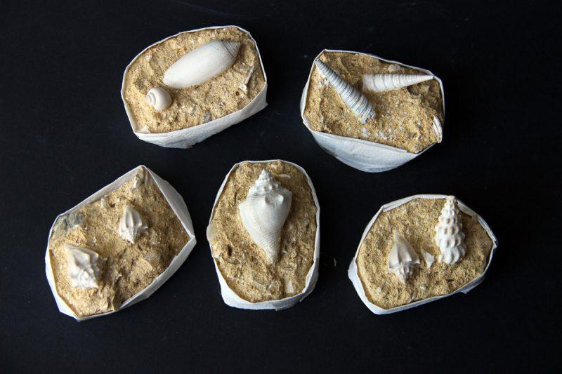 fosilizirane školjke