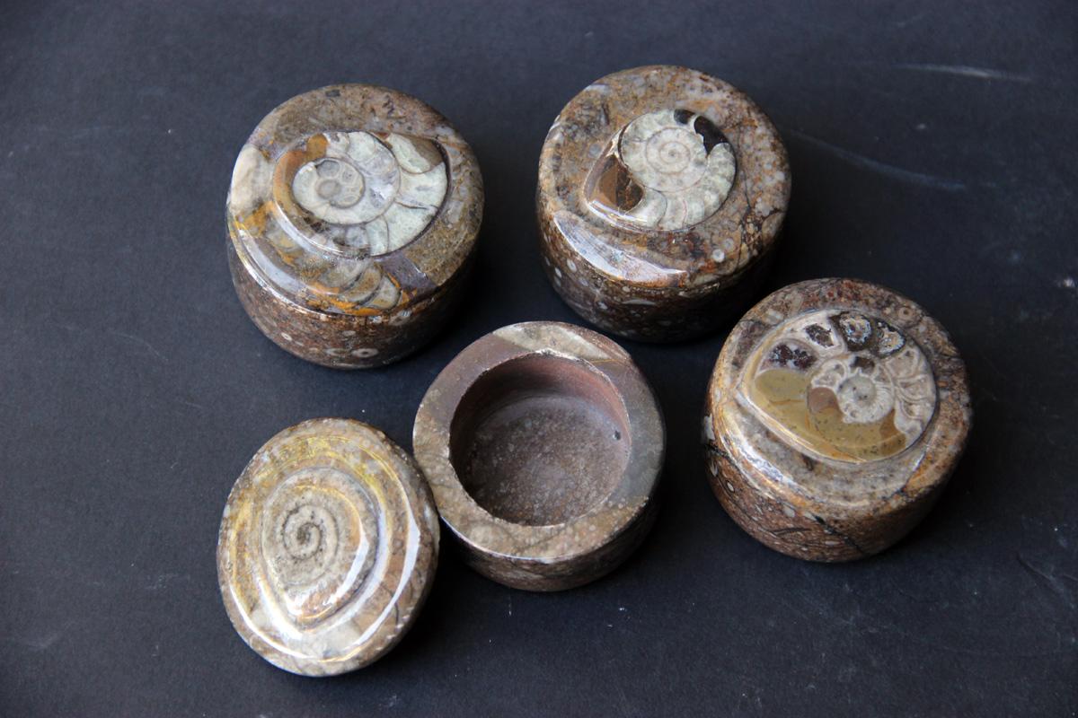 Kutijica sa fosilima