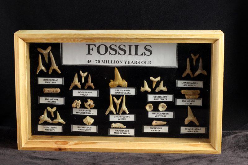 set fosila