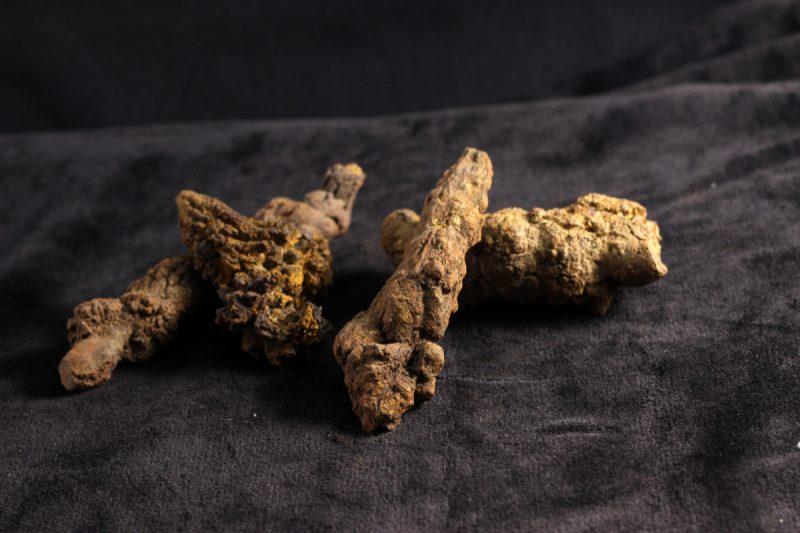 Fosil coprolite